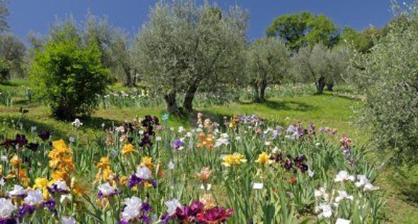 Le case di gaia il giardino dell 39 iris di firenze la - Giardino dell iris firenze ...